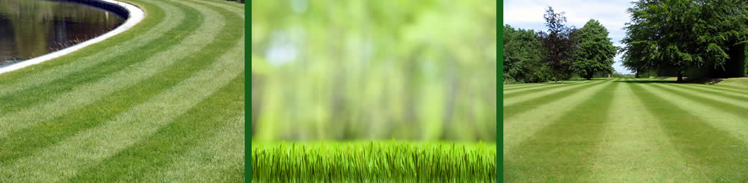 lawn care and fertilization